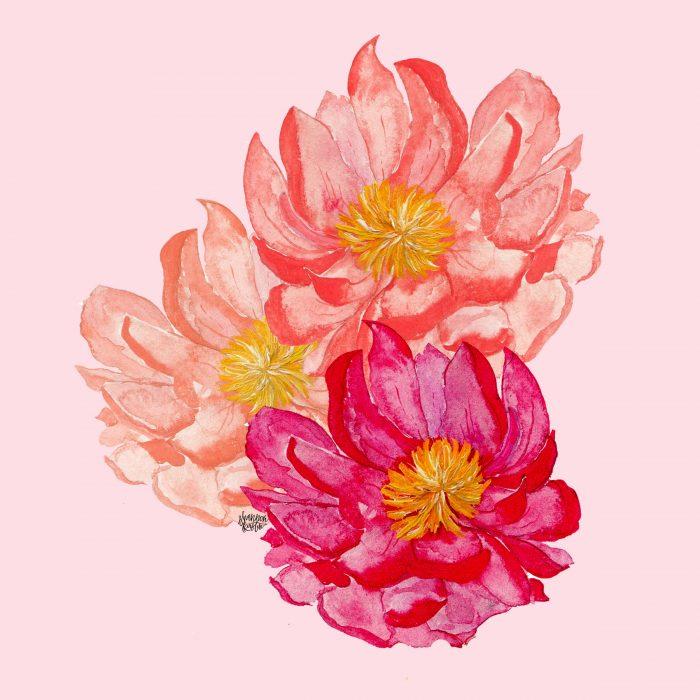 Peonies3-pink